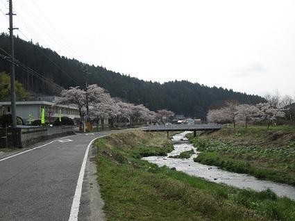 H29.4.21三和小と好間川桜.jpg