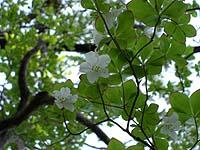 shiroyashio20080509_2