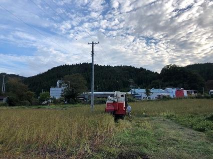 301010下市萱そば畑�.jpg
