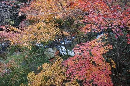 301114紅葉と寒桜�.jpg