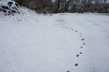 301213 雪景色�.jpg
