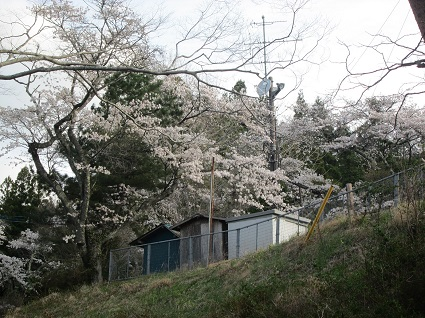 H29.4.20旧永戸小桜 (resize).jpg