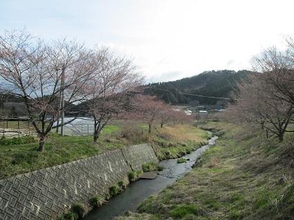 H29.4.20上三坂三坂川の桜 (resize).jpg
